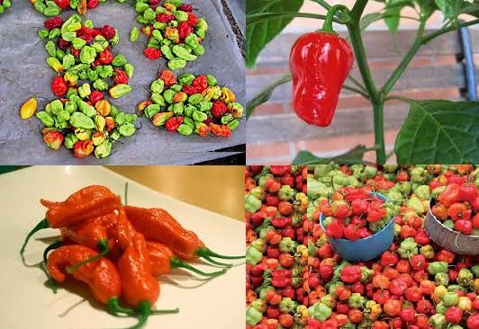 Une variété de piments - © Kalaranet.com