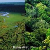 Végétation luxuriante de la forêt du Congo