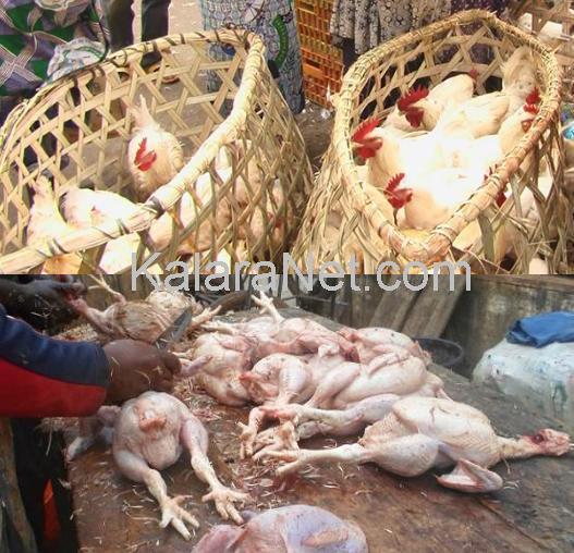 Marchés avicoles de Yaoundé : reprise d'activité