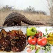 Le pangolin, gibier cuisiné avec du piment et des herbes