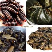 Les chenilles comestibles sont très appréciées au cameroun et Congo