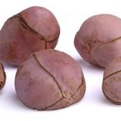 La noix de cola a beaucoup de vertus mais est déconseillée pour les femmes enceintes