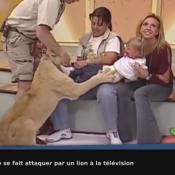 Une petite fille se fait attaquer par un lion à la télévision